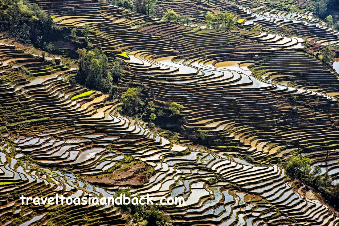 Bada rice terraces, Yuanyang County, Yunnan Province, China
